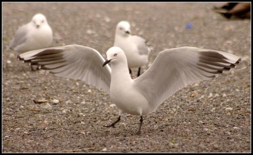 Seagulls infestation